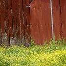 Another Barn by DarylE