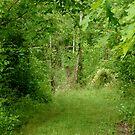 secret path by DarylE
