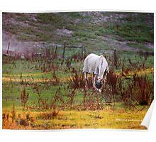 Horse Paddock in Yarra Brae Poster