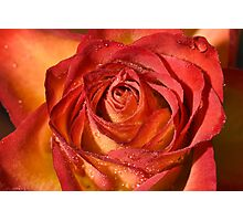 Wet Rose Photographic Print