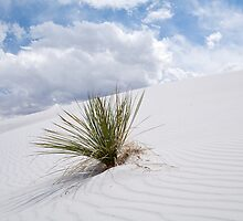 White Sands Dune by Mitchell Tillison