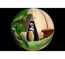 My Humble Abode: Penguin World Photographic Print
