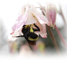 Busy Busy Little Bumble Bee by Jonice