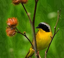 Common YellowThroat Warbler 8 by John Absher
