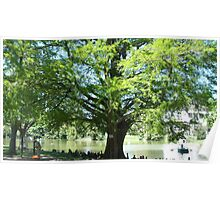 Cypress of Louisiana in Borely Park Poster