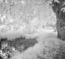 Secret Pool - Infrared by Ann Garrett