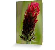 Red Clover Greeting Card
