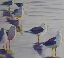 Assorted Gulls by JennyArmitage