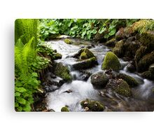 A Gentle Stream Canvas Print