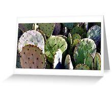 Prickley Pear #3 - Postcard Greeting Card