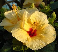 Yellow Hibiscus 2 by Mowny
