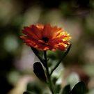 orange by Bimal Tailor