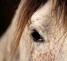 Horse portrait by Ian Middleton