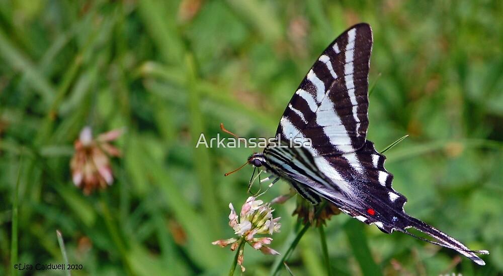 Zebra by ArkansasLisa