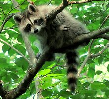 Yeah, I'm just hangin' out. Whatchu doin'? by Jean Gregory  Evans