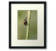Buzz Off! Framed Print