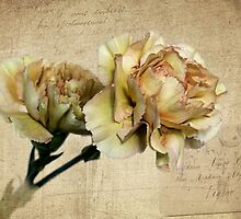 Vintage Carnations by Judy Vincent