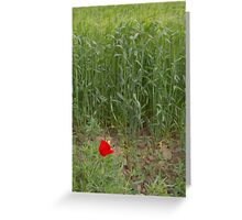 Poppy Time Greeting Card