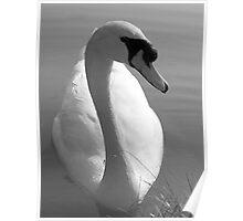 Swan BW Poster