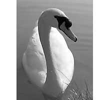 Swan BW Photographic Print
