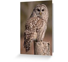 Fixated/Barred Owl Greeting Card