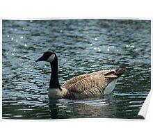 Goosey Goosey Gander, Where Shall I Wander? Poster