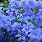 Soooooo many Bluebells by hjaynefoster