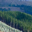 Pine Forest by Colin  Ewington