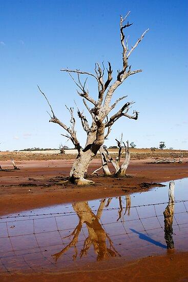 Dead Tree by Colin  Ewington