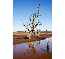 Dead Tree Photographic Print