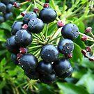 Blackthorn Fruit by sarnia2