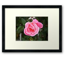 The Pink Promise Framed Print
