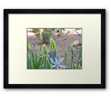 Second Chance Framed Print
