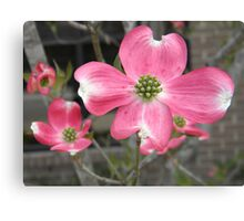 With Open Arms Canvas Print