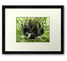 """""""Sunflower Babys"""" Framed Print"""