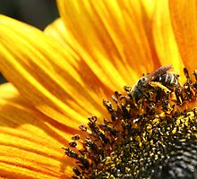 Busy Little Bee by Virginia N. Fred