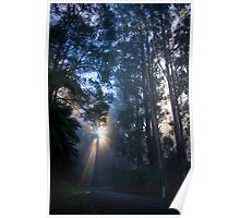 Mt Donna Buang in the Mist Poster