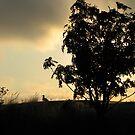 Tree and Gull at Jellicoe Cove - Marathon, Ontario Canada by loralea