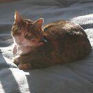 Hazel Sunbathing by Mrswillow