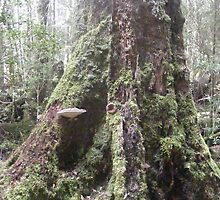 Old growth forest with fungi. by Esther's Art and Photography