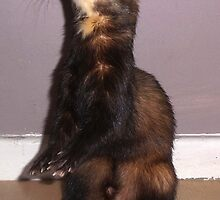 Polecat Standing by Fennic
