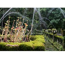 Flower Box and Water Fountain - Paronella Park Photographic Print