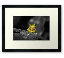Eastern Dwarf Tree Frog - Black and White background Framed Print
