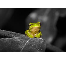 Eastern Dwarf Tree Frog - Black and White background Photographic Print
