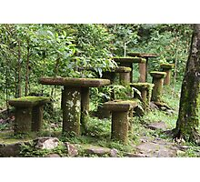 Ye Olde Picnic Tables Photographic Print