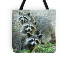 Three Raccoon Tote Bag