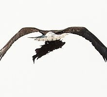 Eagle with Dinner by toby snelgrove  IPA