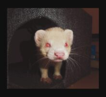 Albino Ferret, Macro One Piece - Short Sleeve