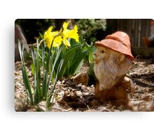 Curious Daffodils Canvas Print