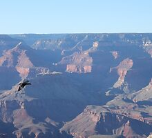 Grand Canyon Bird by cocot101